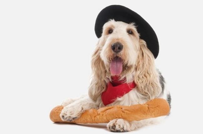Wag-the-dog